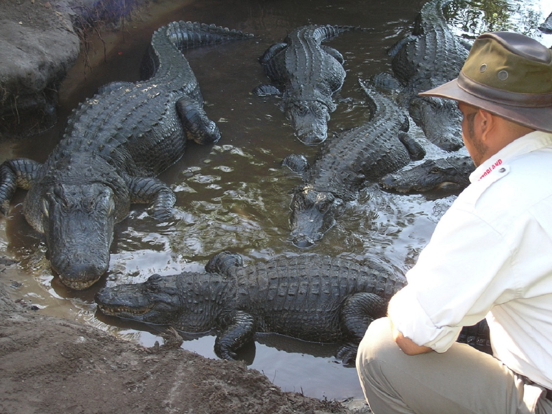 Gatorland_orlando_attractions_american_vacation_living - disney