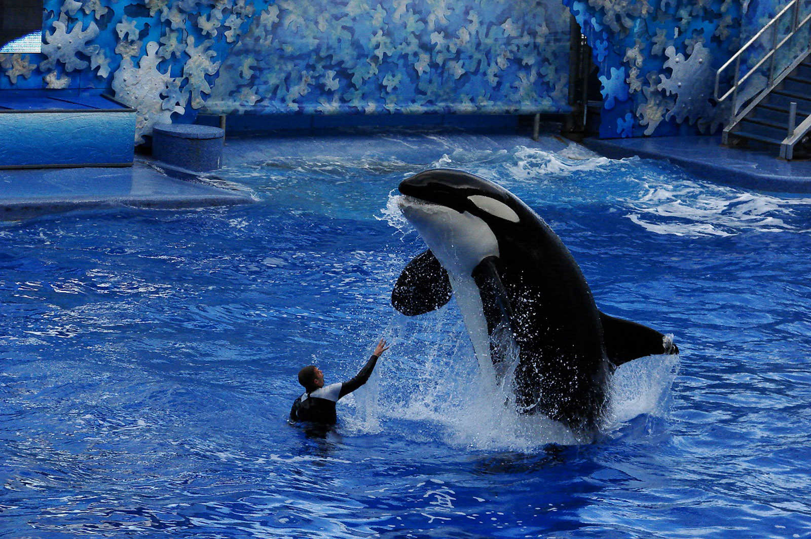 SeaWorld_Disney - disney