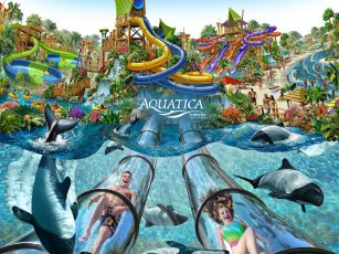 Aquatica_orlando_beach_waterpark_american_vacation_living-307x230 - disney