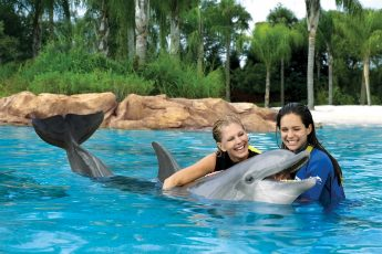 Discovery_Cove_orlando_attractions_american_vacation_living-345x230 - disney