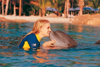 Swim_with_Dolphins_orlando_attractions_american_vacation_living-344x230 - disney